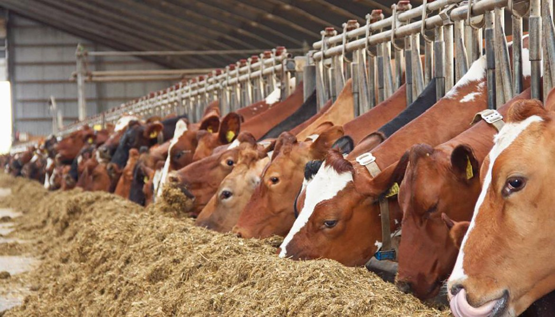 животноводство в москве фото средостения, или по-другому